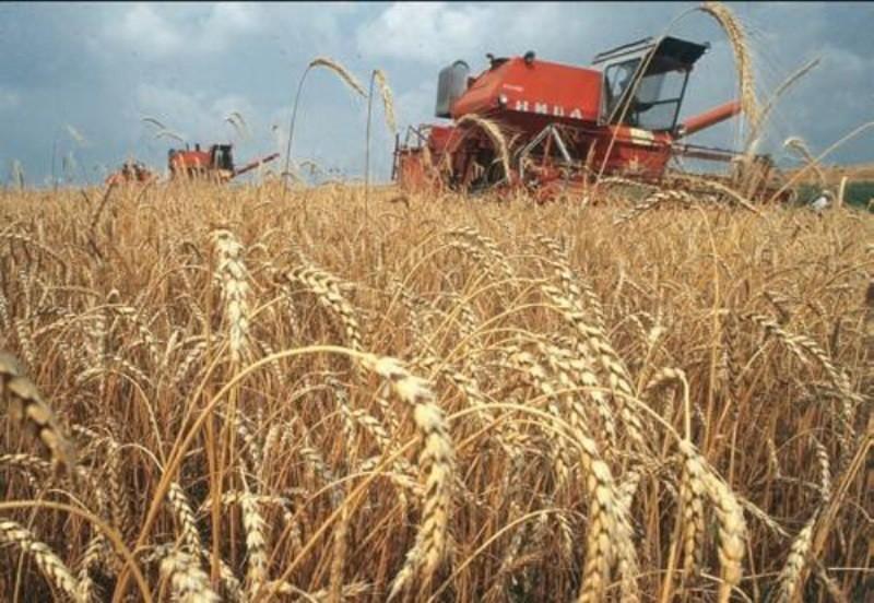Все о выращивание зерновых