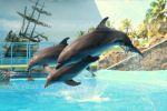 Прыжки в высоту у дельфинов любимое занятие