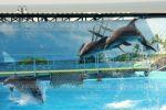 Дельфины красуются перед зрителями