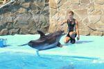 Дельфин Макс