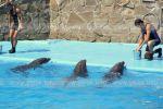 Дельфины тоже любят есть