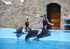 Выступление дельфинов и дресировщиков
